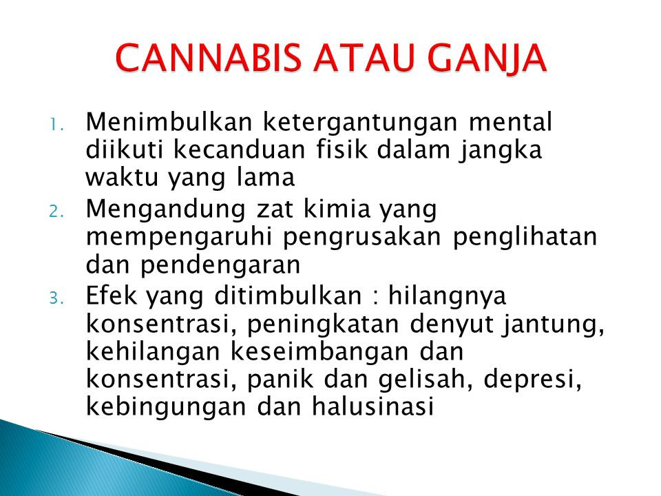 CANNABIS ATAU GANJA Menimbulkan ketergantungan mental diikuti kecanduan fisik dalam jangka waktu yang lama.