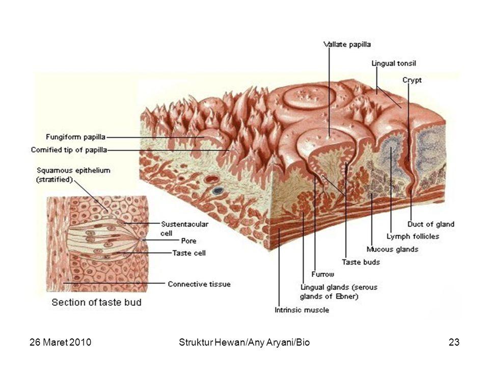 Struktur Hewan/Any Aryani/Bio