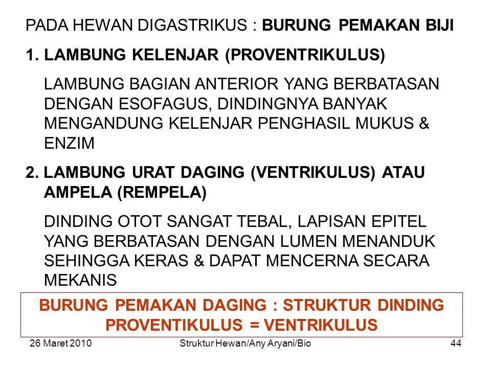 BURUNG PEMAKAN DAGING : STRUKTUR DINDING PROVENTIKULUS = VENTRIKULUS