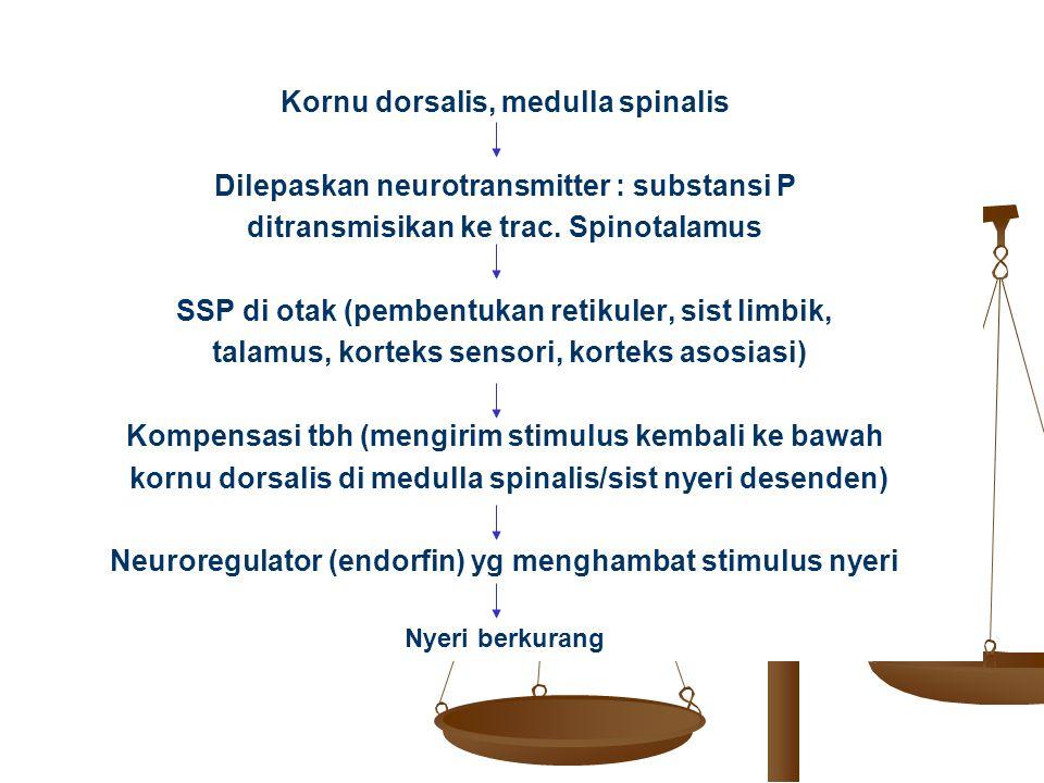 Kornu dorsalis, medulla spinalis