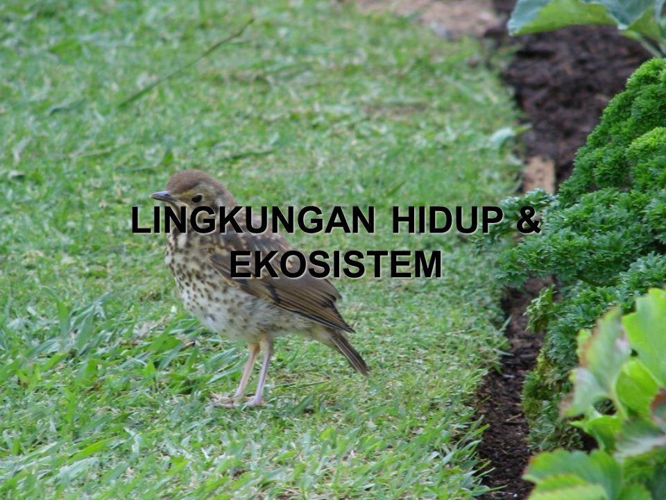 LINGKUNGAN HIDUP & EKOSISTEM