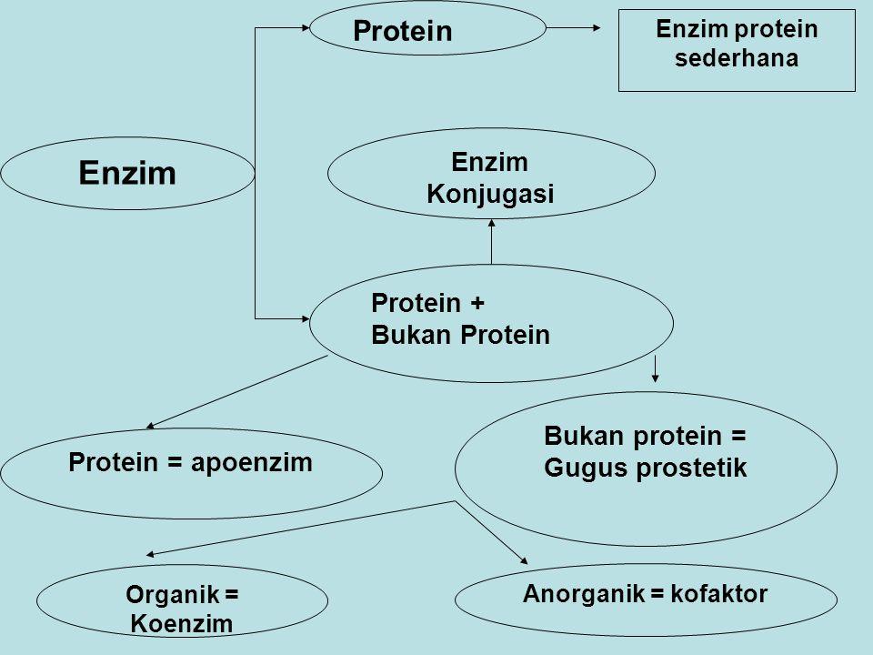 Enzim protein sederhana