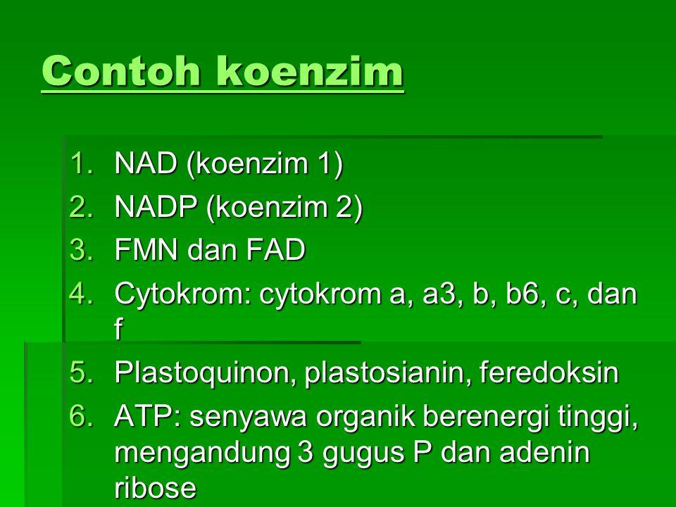 Contoh koenzim NAD (koenzim 1) NADP (koenzim 2) FMN dan FAD