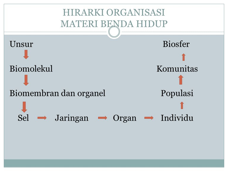 HIRARKI ORGANISASI MATERI BENDA HIDUP
