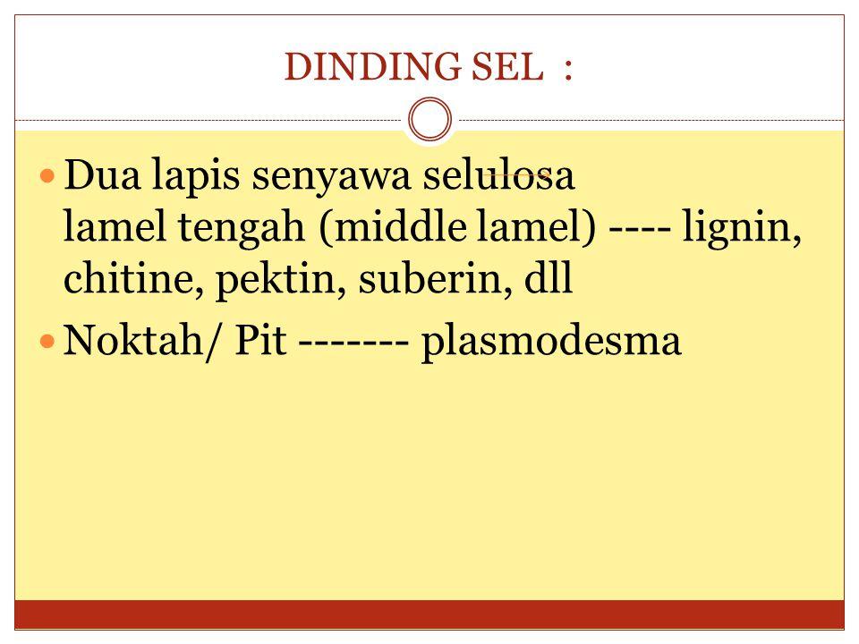 Noktah/ Pit ------- plasmodesma