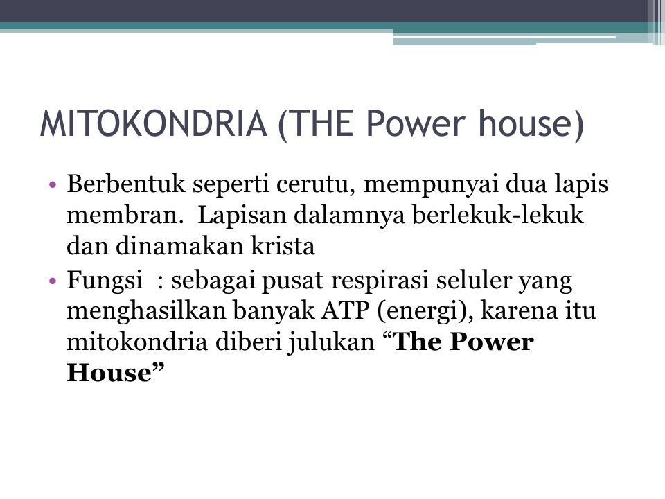 MITOKONDRIA (THE Power house)