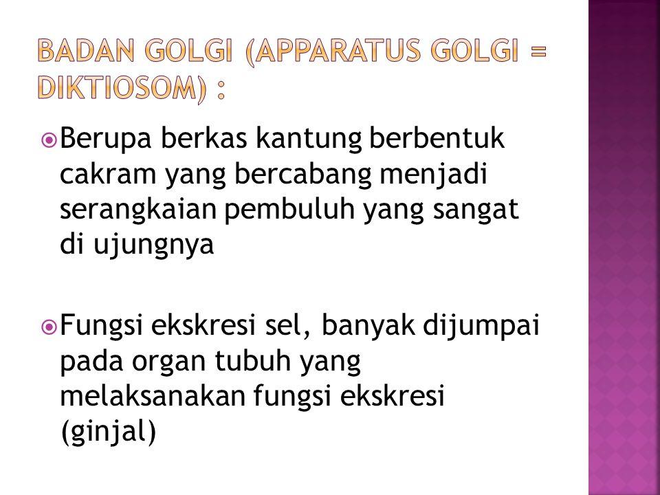 Badan Golgi (Apparatus Golgi = Diktiosom) :