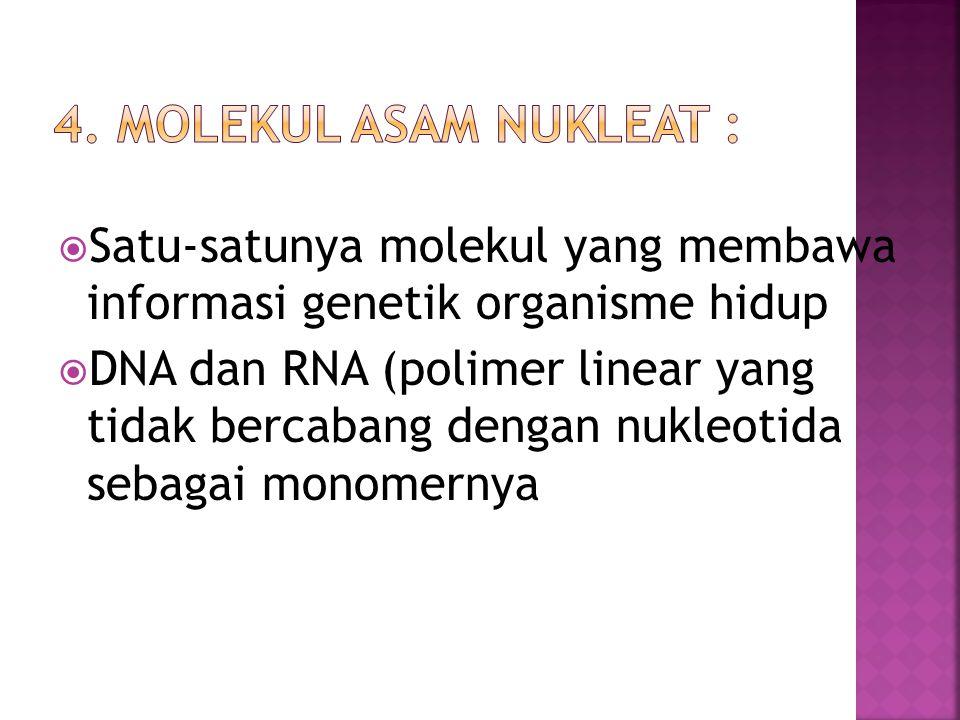 4. Molekul Asam Nukleat : Satu-satunya molekul yang membawa informasi genetik organisme hidup.