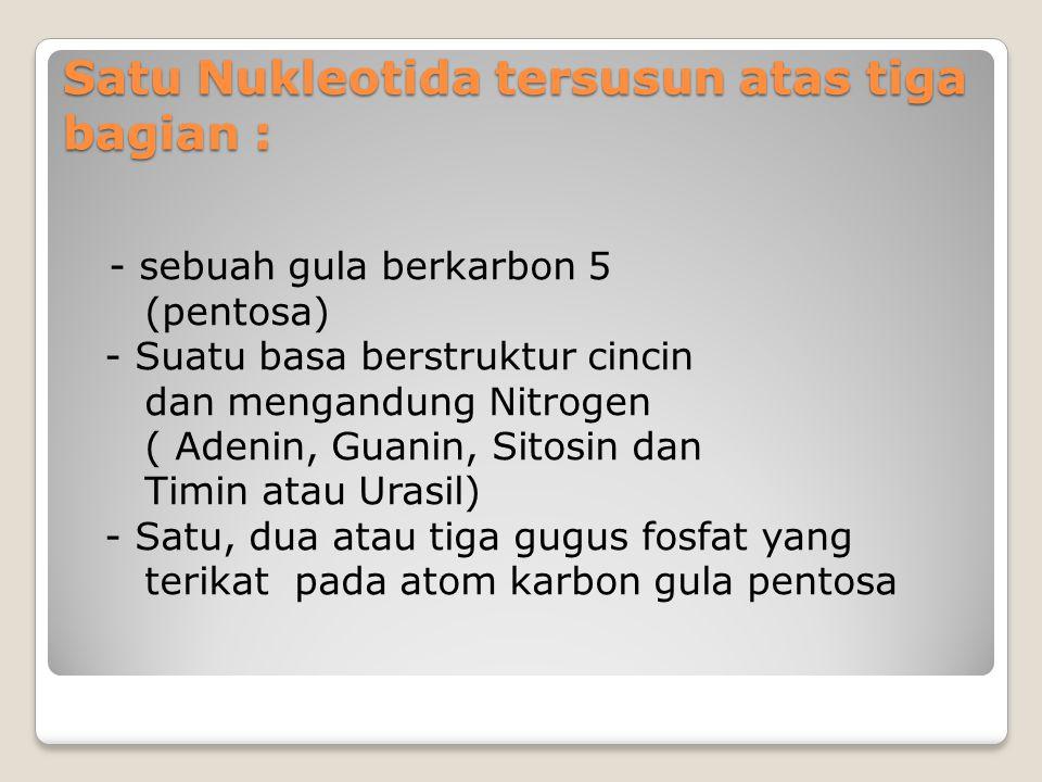 Satu Nukleotida tersusun atas tiga bagian :