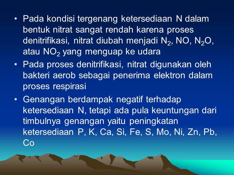 Pada kondisi tergenang ketersediaan N dalam bentuk nitrat sangat rendah karena proses denitrifikasi, nitrat diubah menjadi N2, NO, N2O, atau NO2 yang menguap ke udara