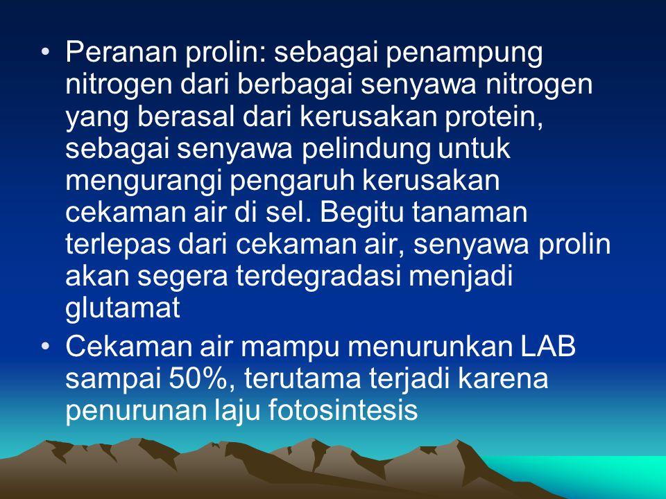 Peranan prolin: sebagai penampung nitrogen dari berbagai senyawa nitrogen yang berasal dari kerusakan protein, sebagai senyawa pelindung untuk mengurangi pengaruh kerusakan cekaman air di sel. Begitu tanaman terlepas dari cekaman air, senyawa prolin akan segera terdegradasi menjadi glutamat