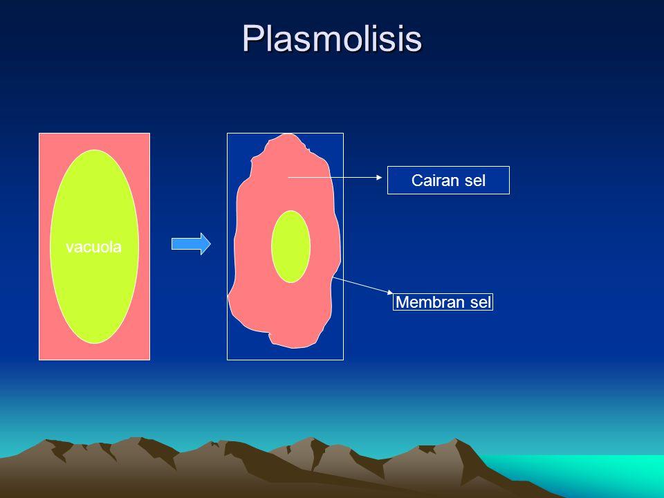 Plasmolisis vacuola Cairan sel Membran sel