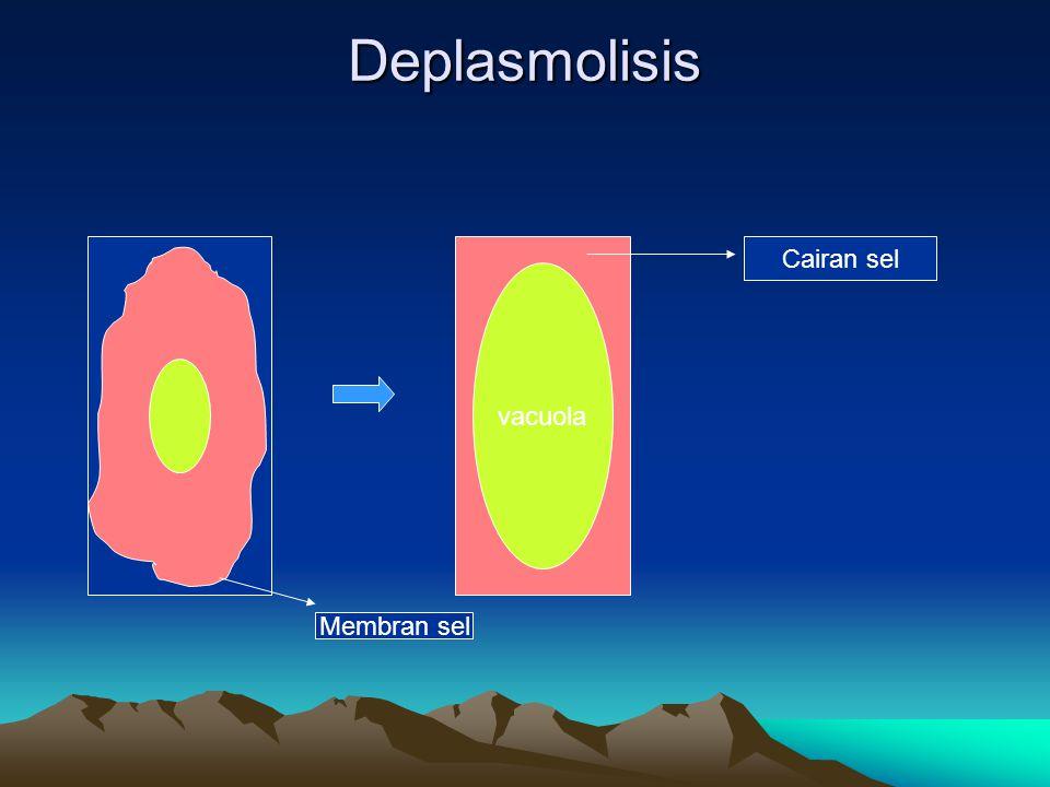 Deplasmolisis Cairan sel vacuola Membran sel