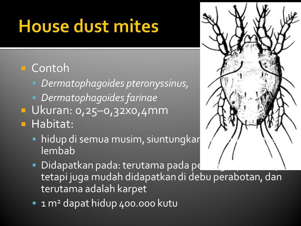 House dust mites Contoh Ukuran: 0,25–0,32x0,4mm Habitat: