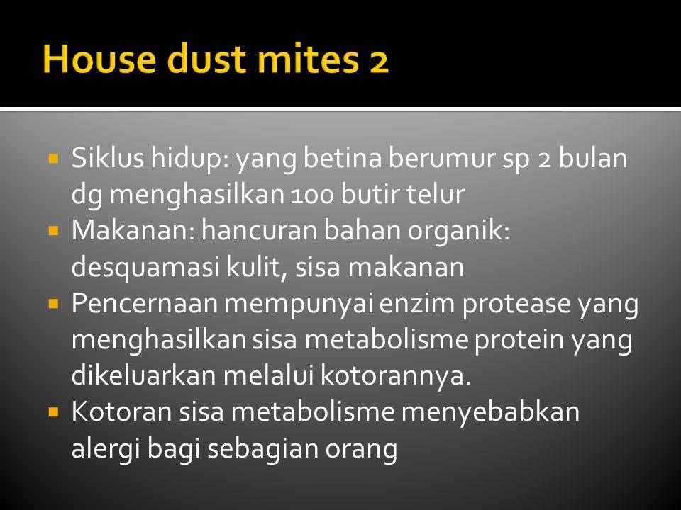 House dust mites 2 Siklus hidup: yang betina berumur sp 2 bulan dg menghasilkan 100 butir telur.