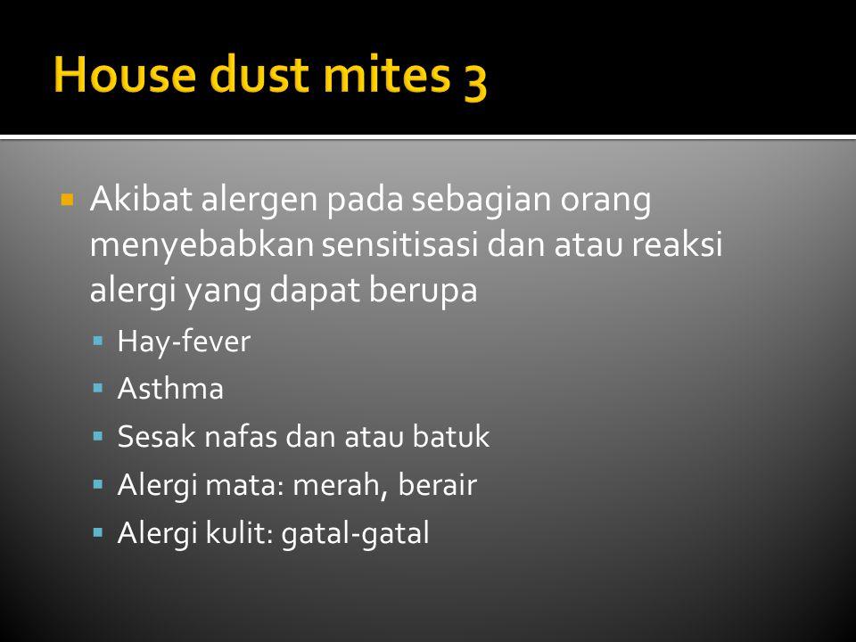 House dust mites 3 Akibat alergen pada sebagian orang menyebabkan sensitisasi dan atau reaksi alergi yang dapat berupa.