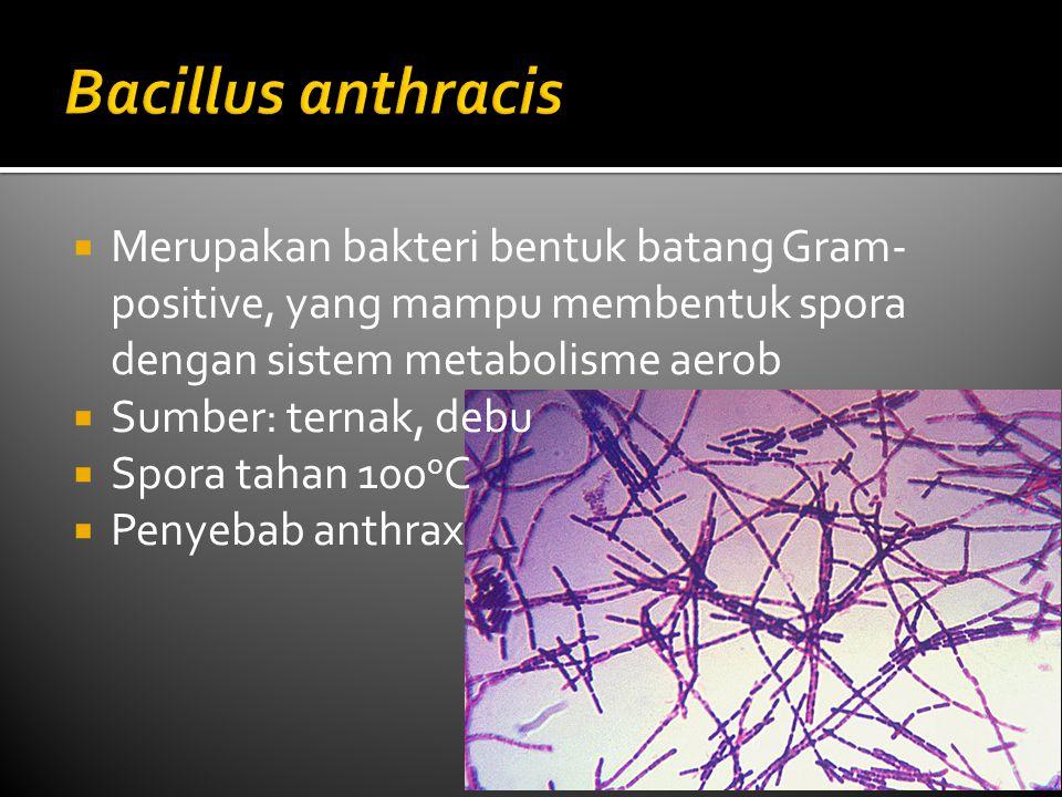 Bacillus anthracis Merupakan bakteri bentuk batang Gram-positive, yang mampu membentuk spora dengan sistem metabolisme aerob.