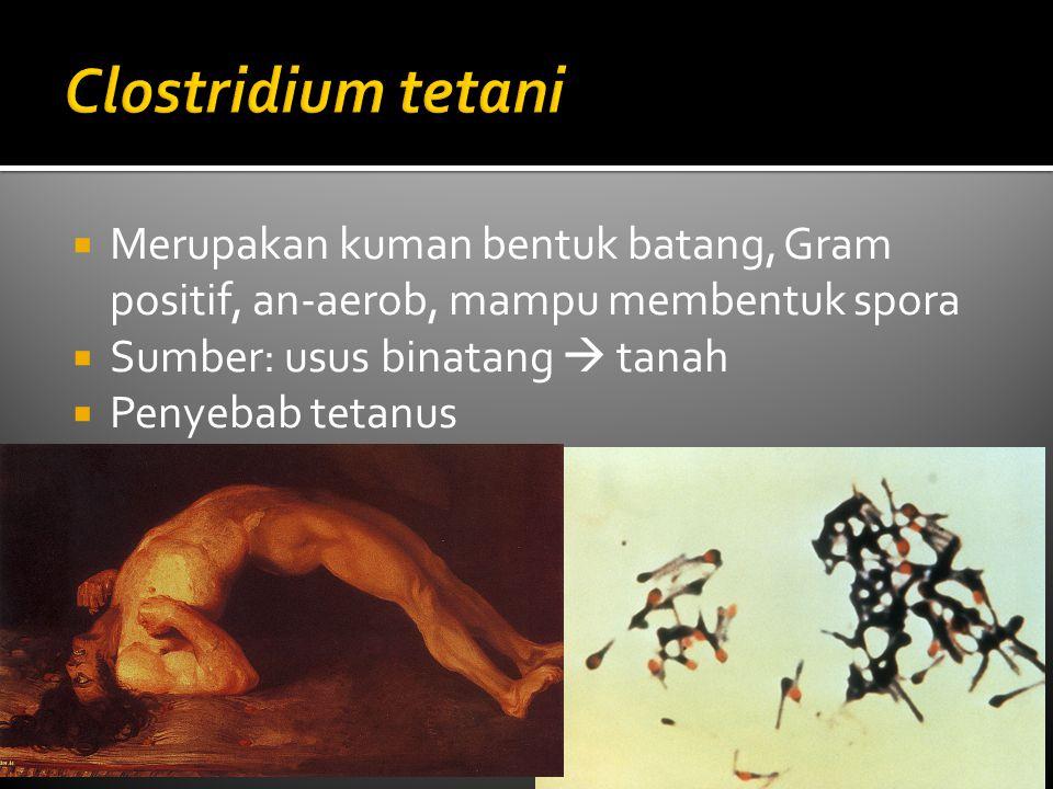 Clostridium tetani Merupakan kuman bentuk batang, Gram positif, an-aerob, mampu membentuk spora. Sumber: usus binatang  tanah.