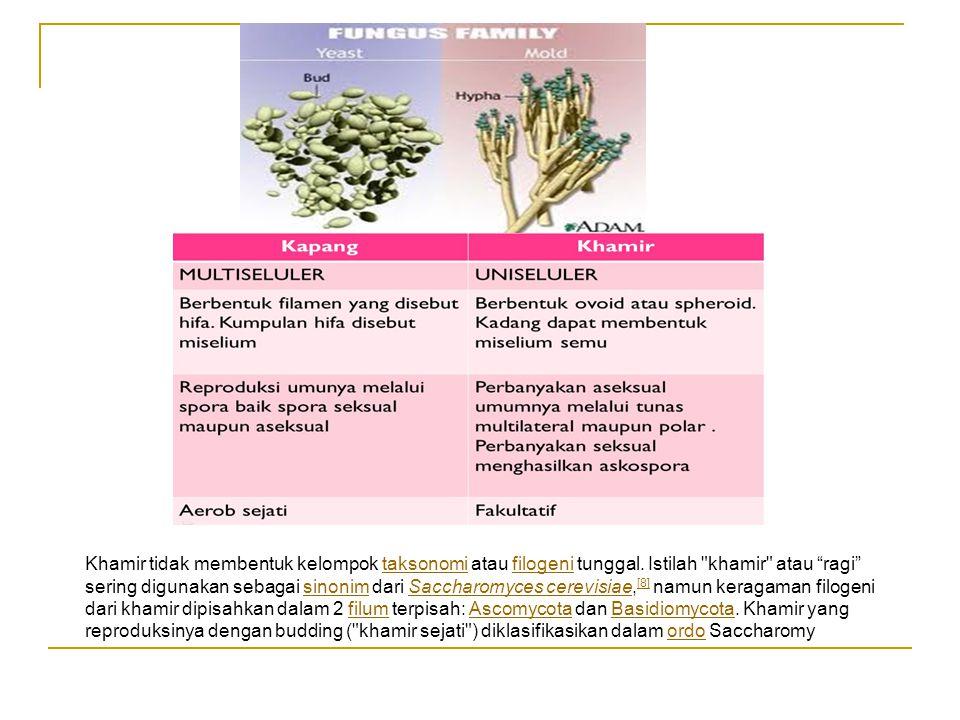 Khamir tidak membentuk kelompok taksonomi atau filogeni tunggal