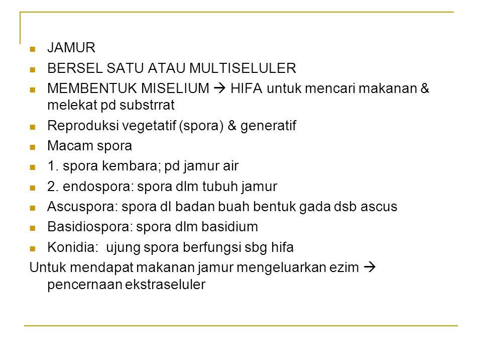 JAMUR BERSEL SATU ATAU MULTISELULER. MEMBENTUK MISELIUM  HIFA untuk mencari makanan & melekat pd substrrat.