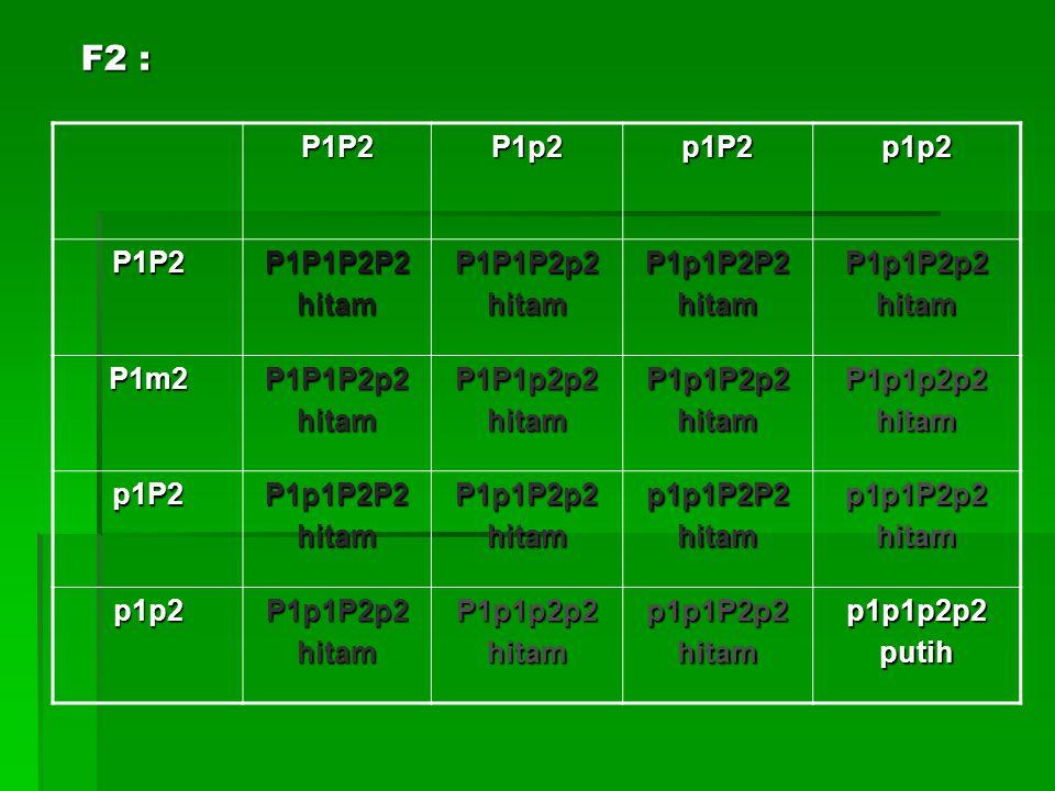 F2 : P1P2 P1p2 p1P2 p1p2 P1P1P2P2 hitam P1P1P2p2 P1p1P2P2 P1p1P2p2