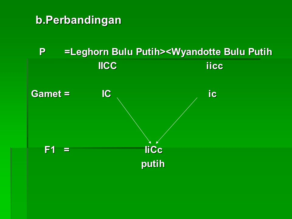 b.Perbandingan P =Leghorn Bulu Putih><Wyandotte Bulu Putih