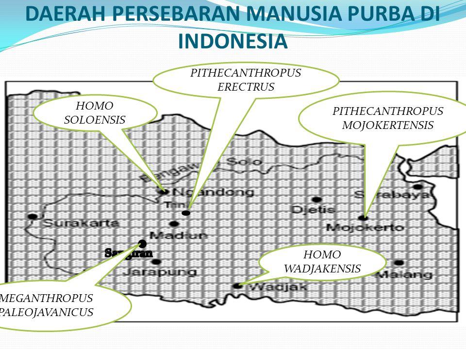 DAERAH PERSEBARAN MANUSIA PURBA DI INDONESIA
