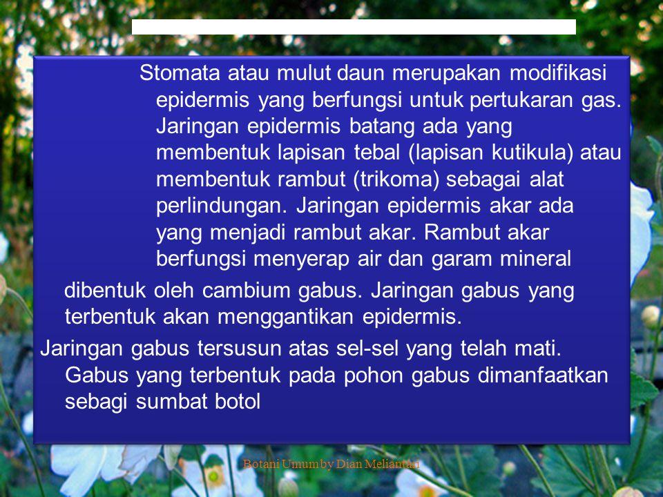 Botani Umum by Dian Meliantari