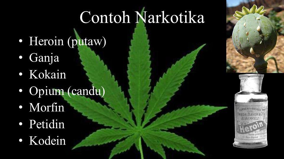 Contoh Narkotika Heroin (putaw) Ganja Kokain Opium (candu) Morfin