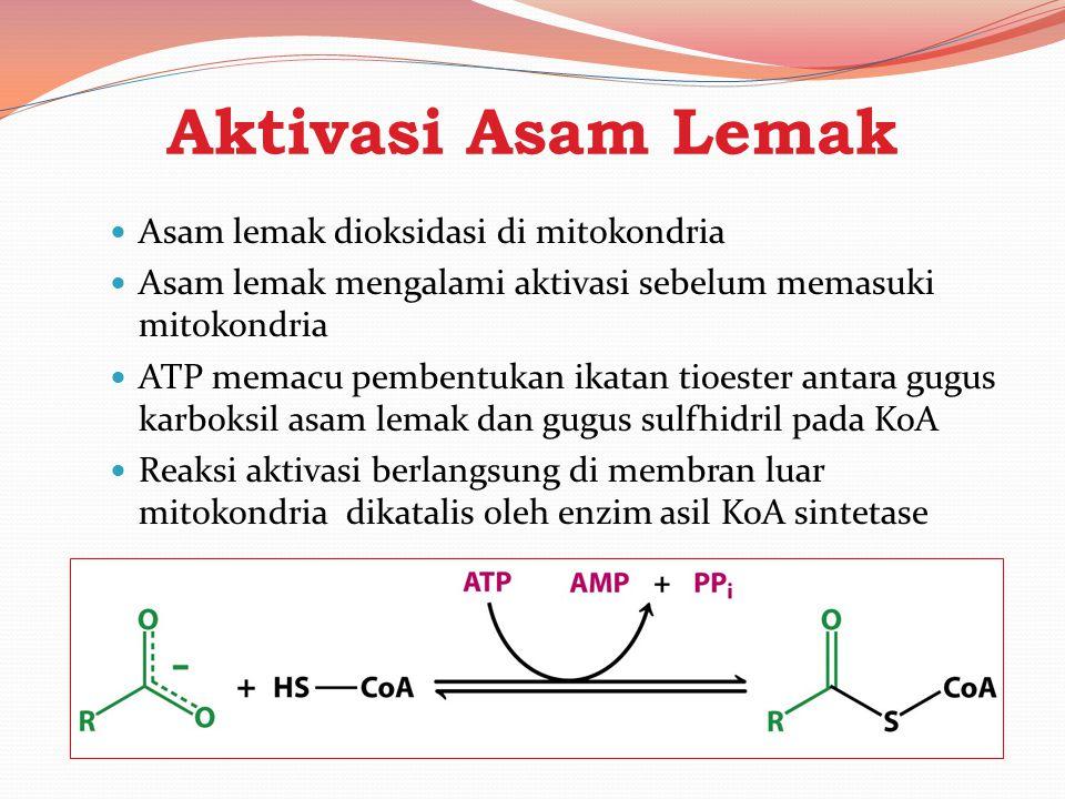 Aktivasi Asam Lemak Asam lemak dioksidasi di mitokondria