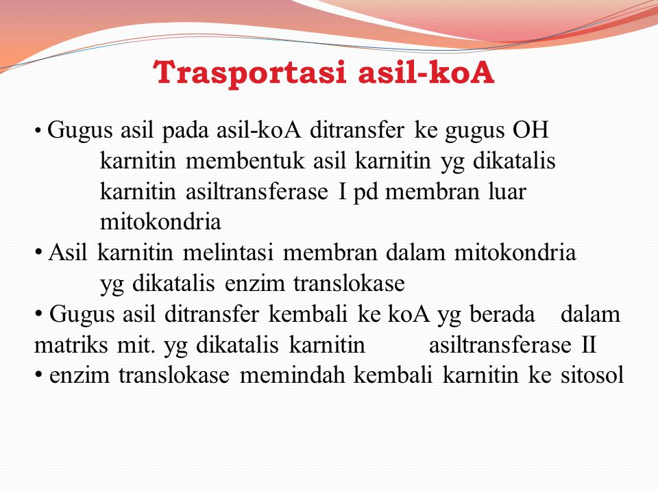 Trasportasi asil-koA