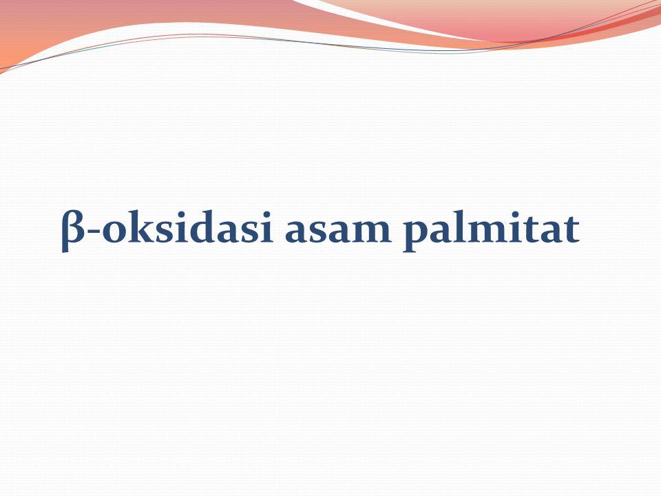 β-oksidasi asam palmitat