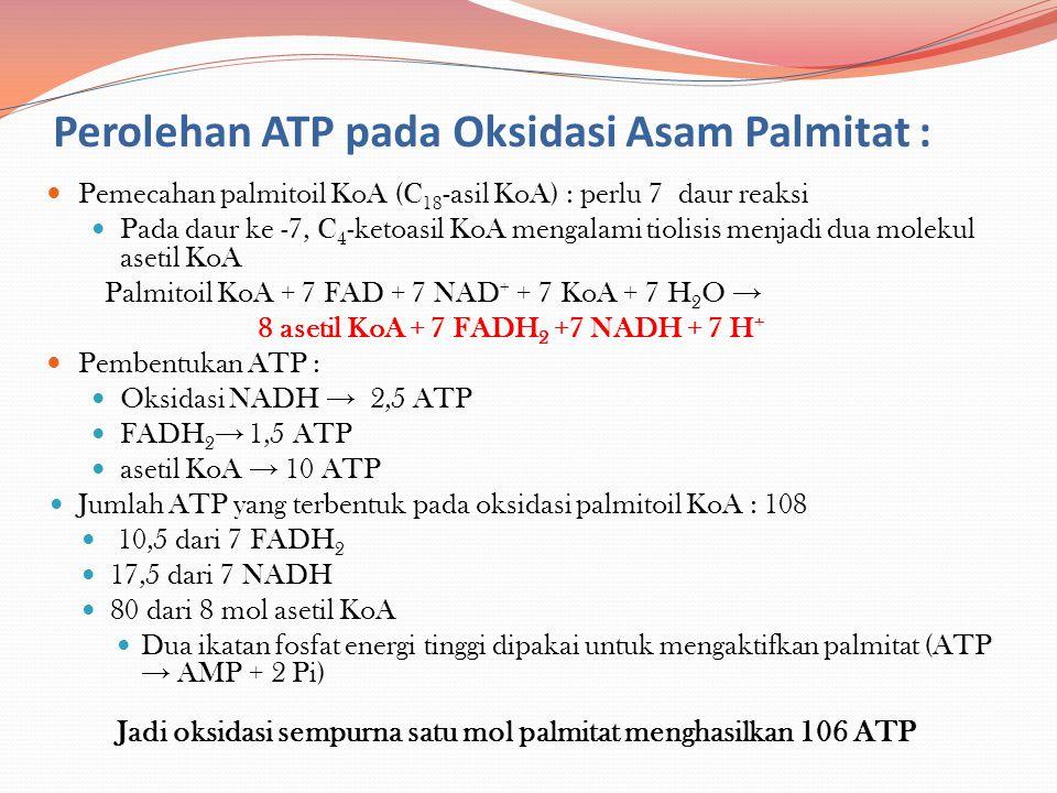Perolehan ATP pada Oksidasi Asam Palmitat :