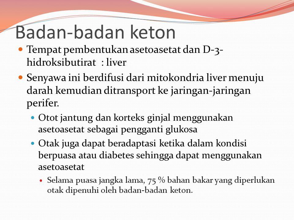 Badan-badan keton Tempat pembentukan asetoasetat dan D-3-hidroksibutirat : liver.
