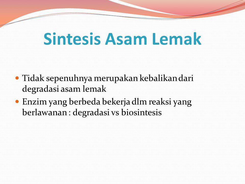 Sintesis Asam Lemak Tidak sepenuhnya merupakan kebalikan dari degradasi asam lemak.