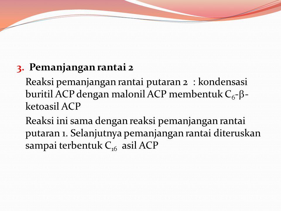 3. Pemanjangan rantai 2 Reaksi pemanjangan rantai putaran 2 : kondensasi buritil ACP dengan malonil ACP membentuk C6--ketoasil ACP.