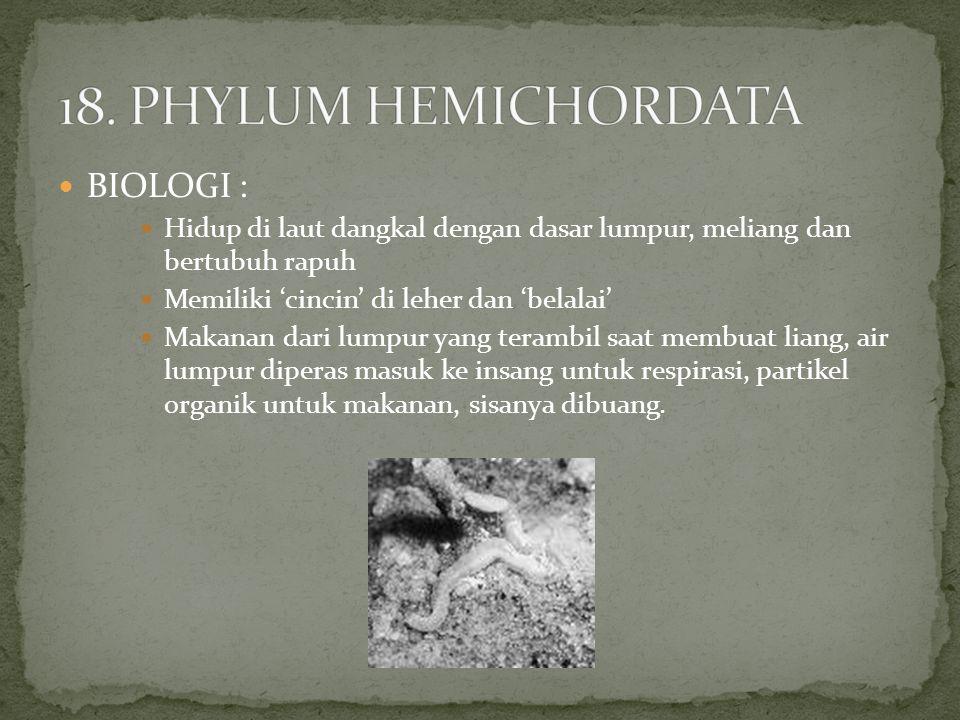 18. PHYLUM HEMICHORDATA BIOLOGI :