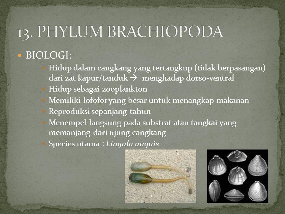 13. PHYLUM BRACHIOPODA BIOLOGI: