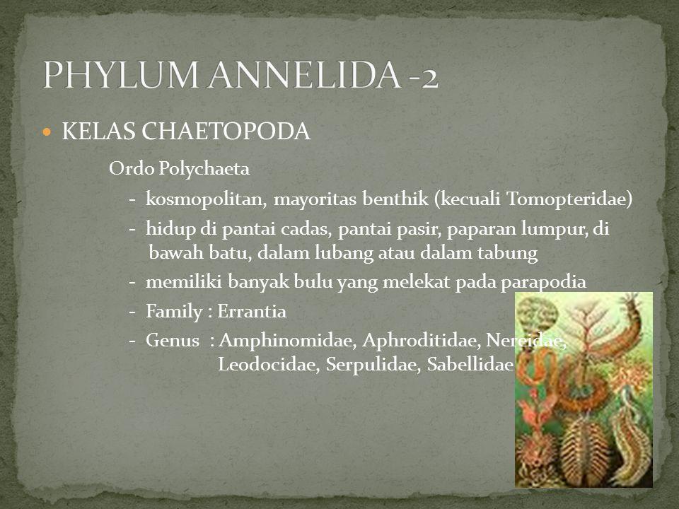 PHYLUM ANNELIDA -2 KELAS CHAETOPODA Ordo Polychaeta