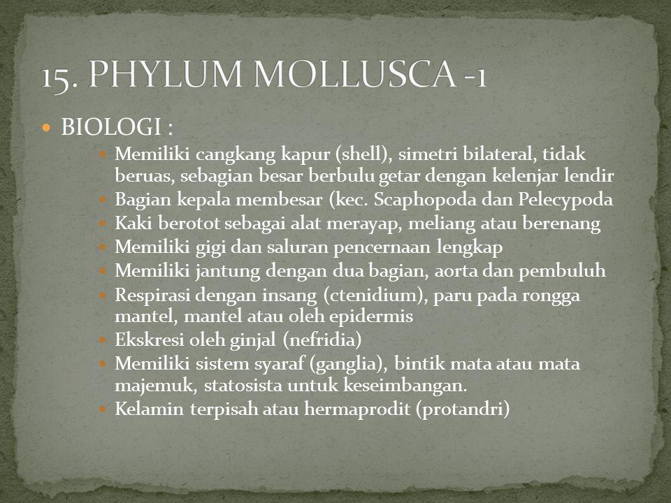 15. PHYLUM MOLLUSCA -1 BIOLOGI :
