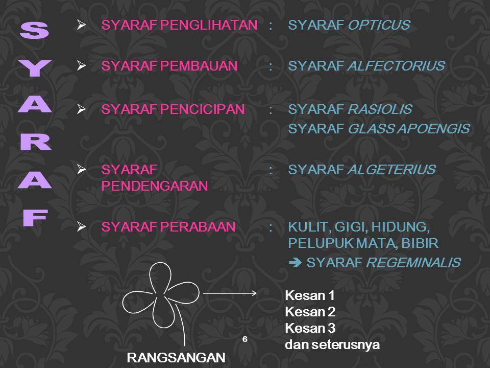 SYARAF SYARAF PENGLIHATAN : SYARAF OPTICUS SYARAF PEMBAUAN