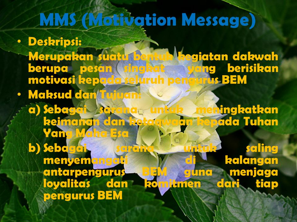 MMS (Motivation Message)