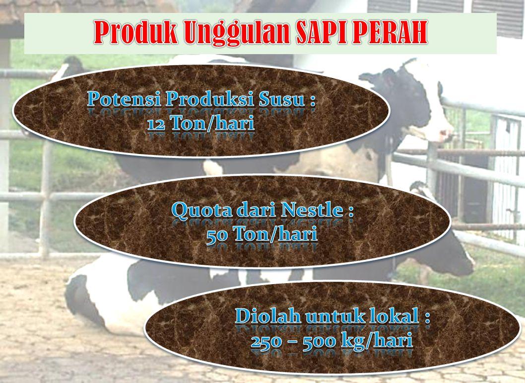 Produk Unggulan SAPI PERAH Potensi Produksi Susu :