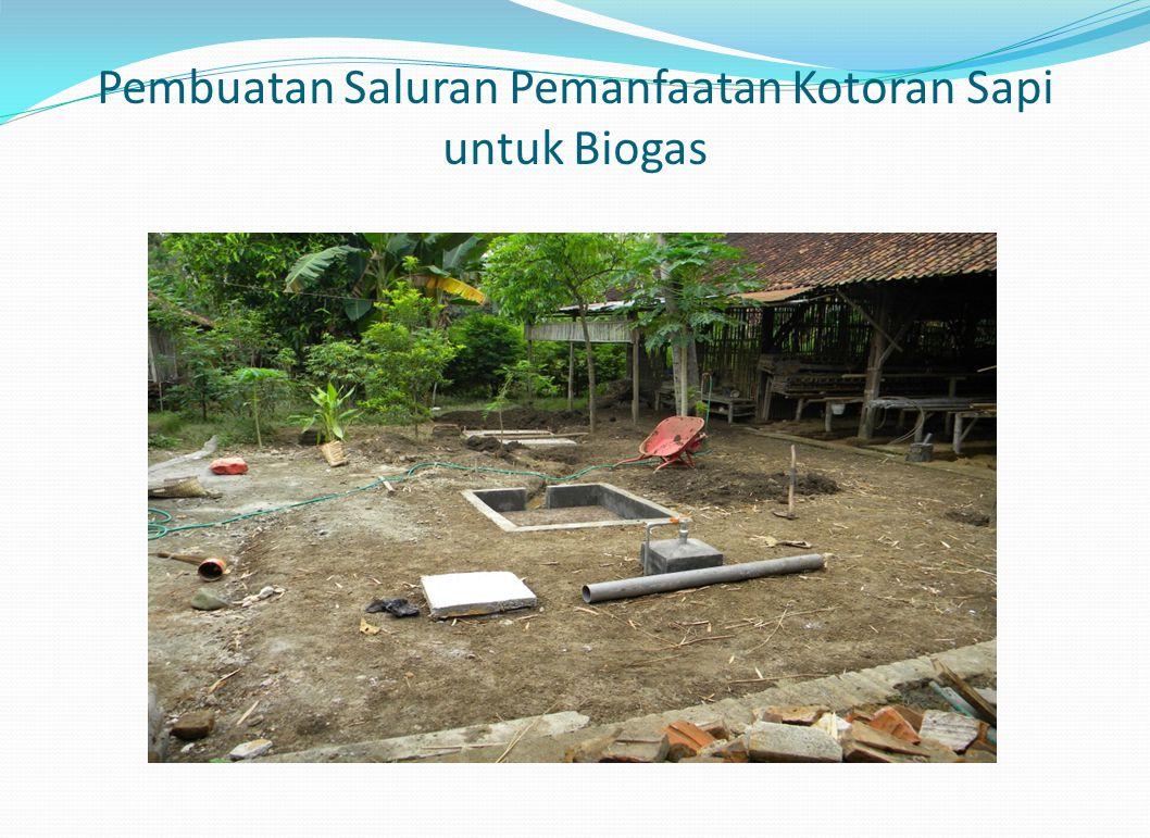 Pembuatan Saluran Pemanfaatan Kotoran Sapi untuk Biogas