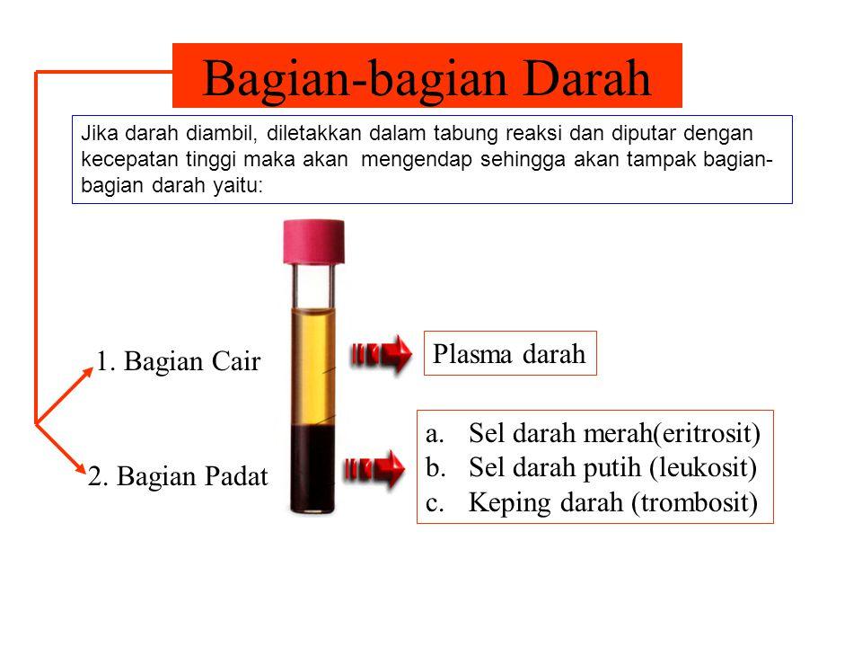 Bagian-bagian Darah Plasma darah 1. Bagian Cair