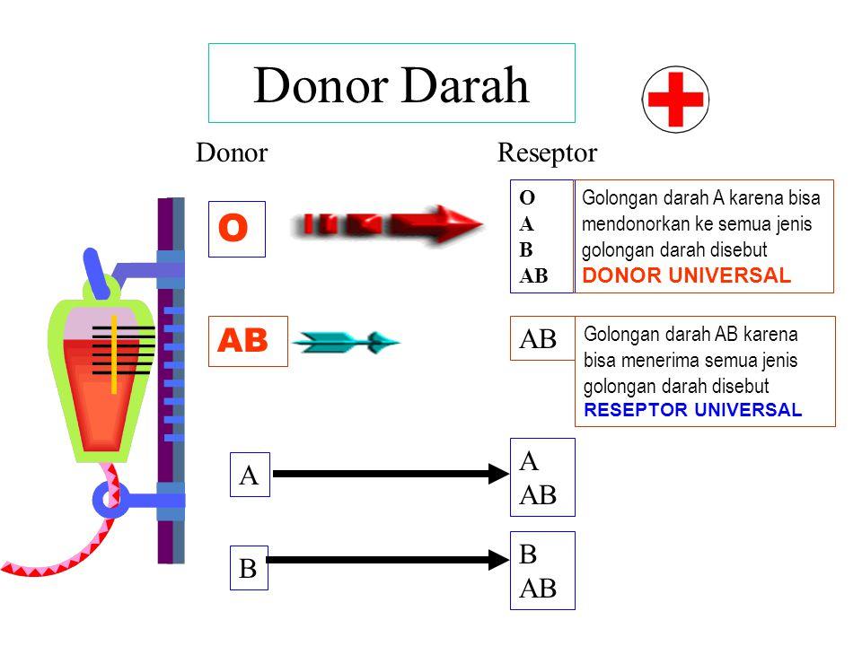 Donor Darah O AB Donor Reseptor AB A AB A B AB B O A B AB