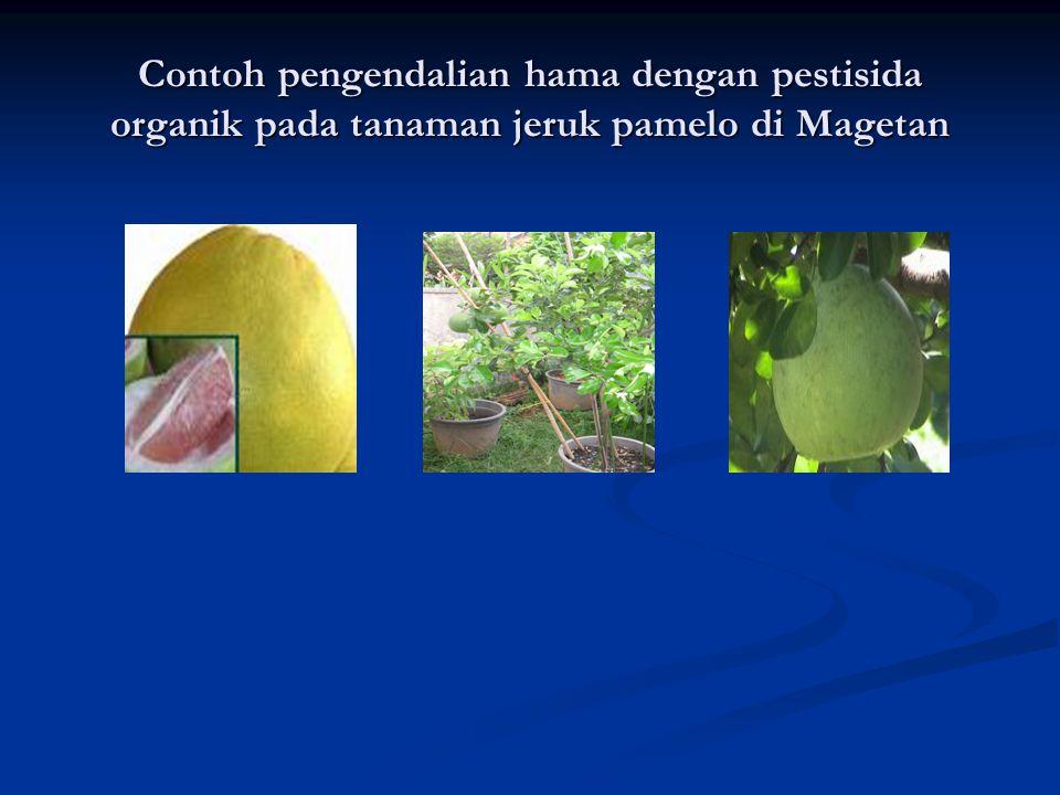 Contoh pengendalian hama dengan pestisida organik pada tanaman jeruk pamelo di Magetan