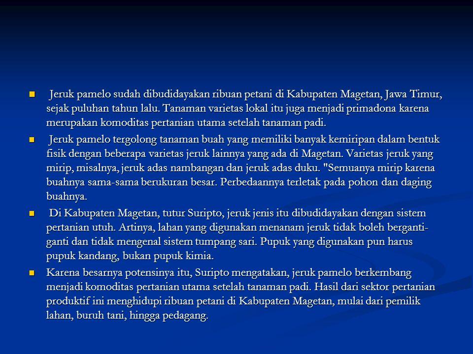 Jeruk pamelo sudah dibudidayakan ribuan petani di Kabupaten Magetan, Jawa Timur, sejak puluhan tahun lalu. Tanaman varietas lokal itu juga menjadi primadona karena merupakan komoditas pertanian utama setelah tanaman padi.