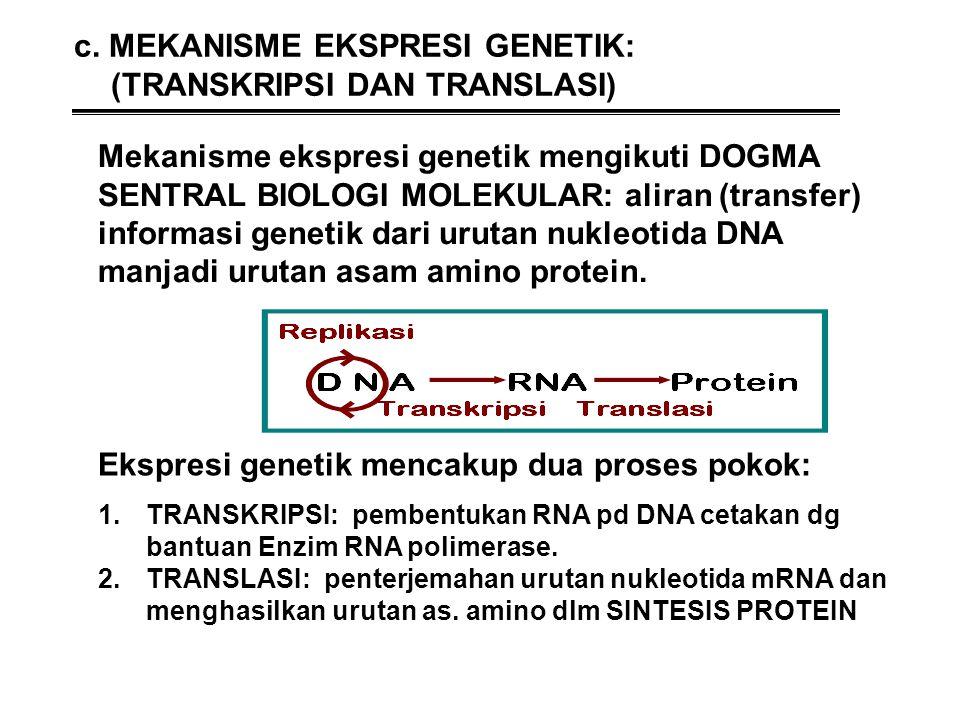 c. MEKANISME EKSPRESI GENETIK: (TRANSKRIPSI DAN TRANSLASI)