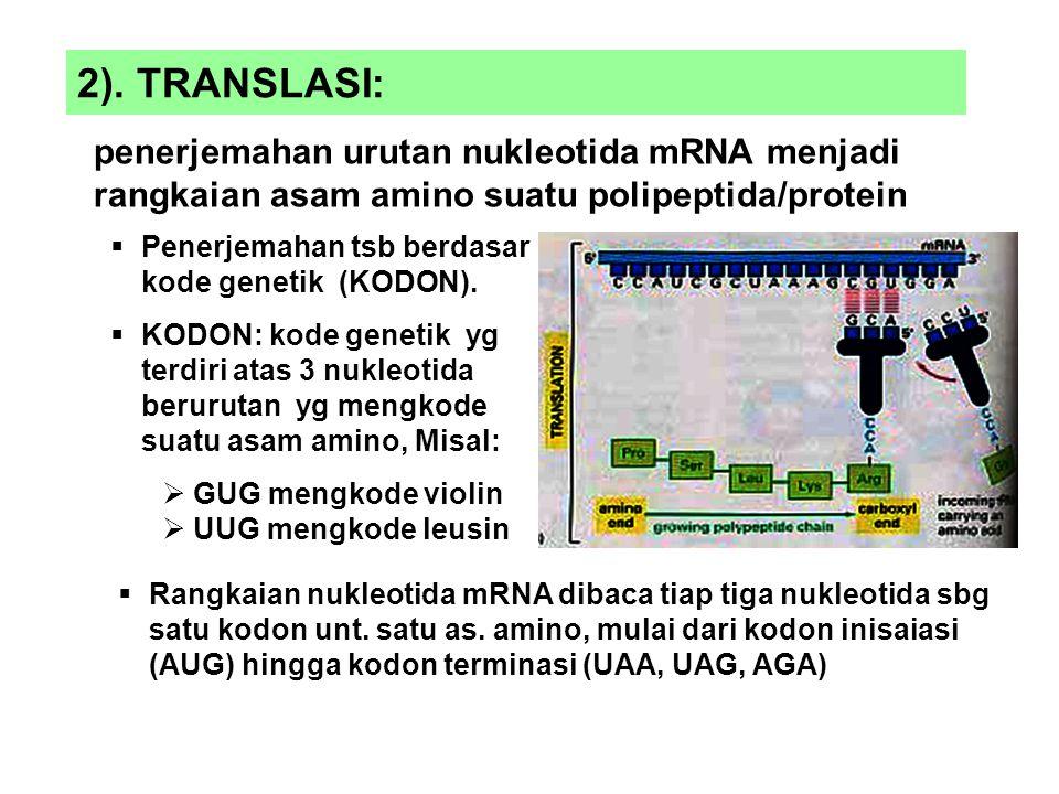 2). TRANSLASI: penerjemahan urutan nukleotida mRNA menjadi rangkaian asam amino suatu polipeptida/protein.
